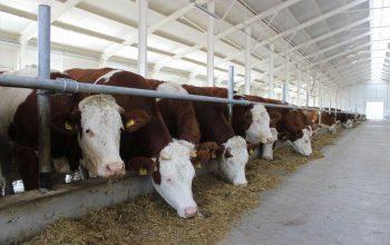 Открылась новая молочно-товарная ферма, оснащенная по последнему слову техники